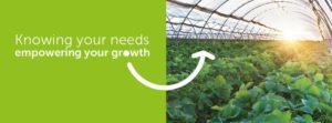 Ưu điểm của màng kính Ginegar là rất tốt cho cây trồng và con người.