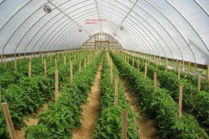 Cung cấp vật tư, làm nhà kính, nhà lưới trồng rau (Green house).