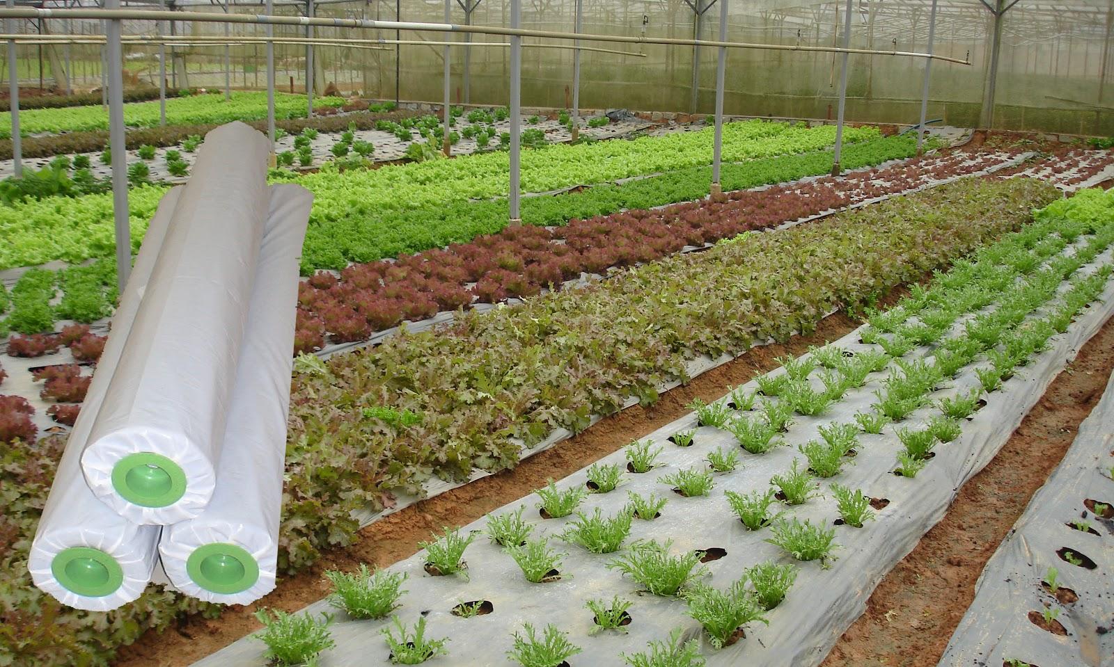 Màng phủ nông nghiệp giá rẻ chất lượng cao tại Hà Nội