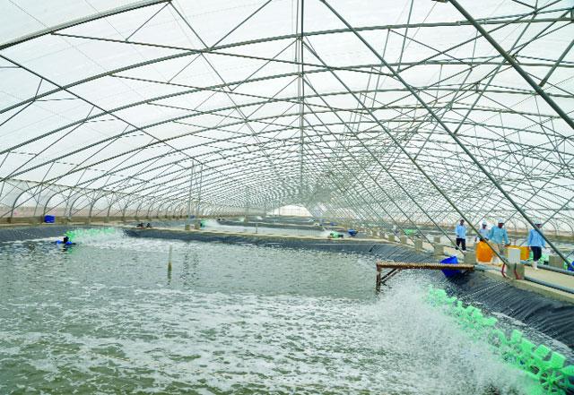Ứng dụng của màng nhà kính trong nông nghiệp công nghệ cao